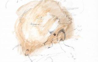 Orfeo incantatore - Jacopo Casadei